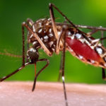 Good news! Nigeria Surgeon discovers possible cure for Zika virus, malaria and others