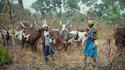 Herdsmen, Herdsmen reveal next line of action in the Benue anti-open grazing law, Latest Nigeria News, Daily Devotionals & Celebrity Gossips - Chidispalace
