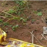 This Is Disturbing Photo of A Day Old Baby Abandoned Along The Expressway