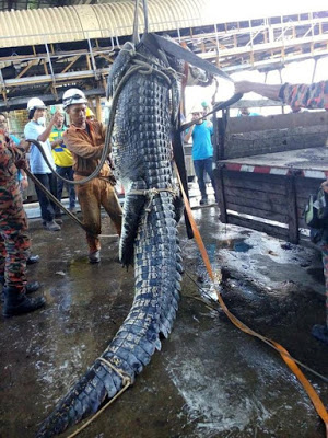 Stunning 20 Feet Crocodile Dies After Fire Fighters Fought  For 10 Hours To Rescue It