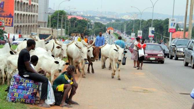 herdsmen, Police gives reason why they won't arrest herdsmen grazing cattle on airport runways, Latest Nigeria News, Daily Devotionals & Celebrity Gossips - Chidispalace