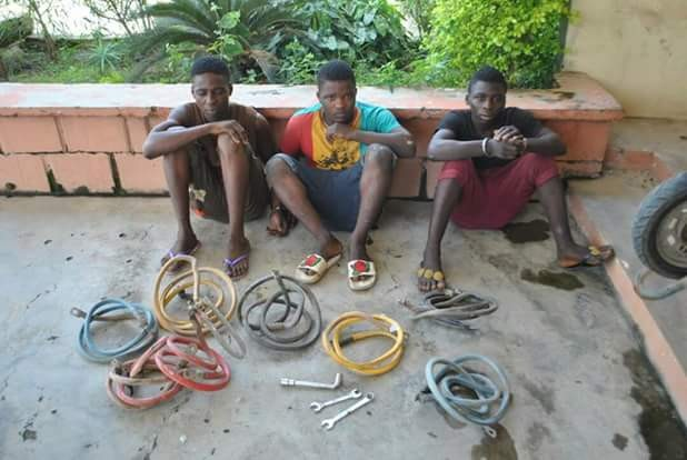 , See Photos of three-gang transformer vandals after being arrested in Niger State, Latest Nigeria News, Daily Devotionals & Celebrity Gossips - Chidispalace