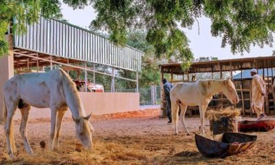 Photo of President Buhari at his farm in Daura today