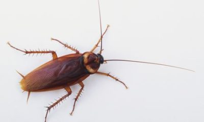 Man accidentally shoots himself after throwing his gun at a cockroach in an attempt to kill it