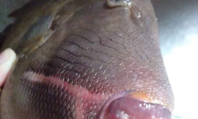 See Viral photos of a fish with lips and teeth